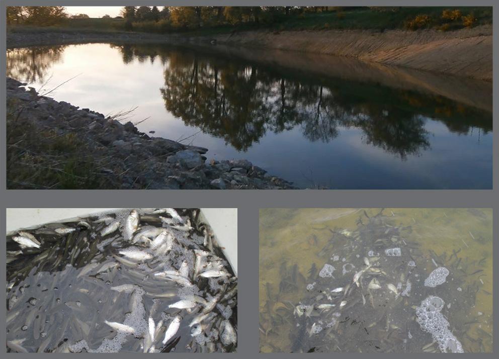 Arrivage des poissons pour la retenue, biodiversité en développement